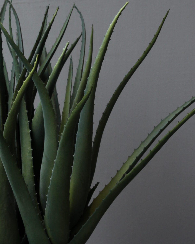 large spiky aloe vera in grey cement pot plants flowers shop now. Black Bedroom Furniture Sets. Home Design Ideas